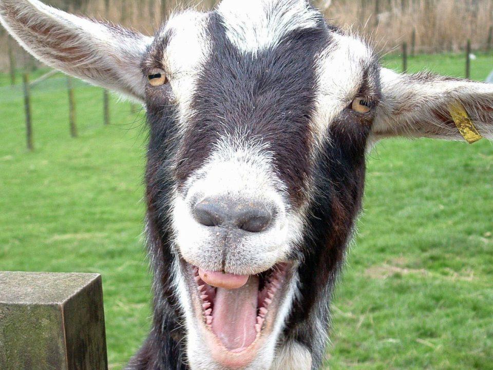 смешные фото про козлов того