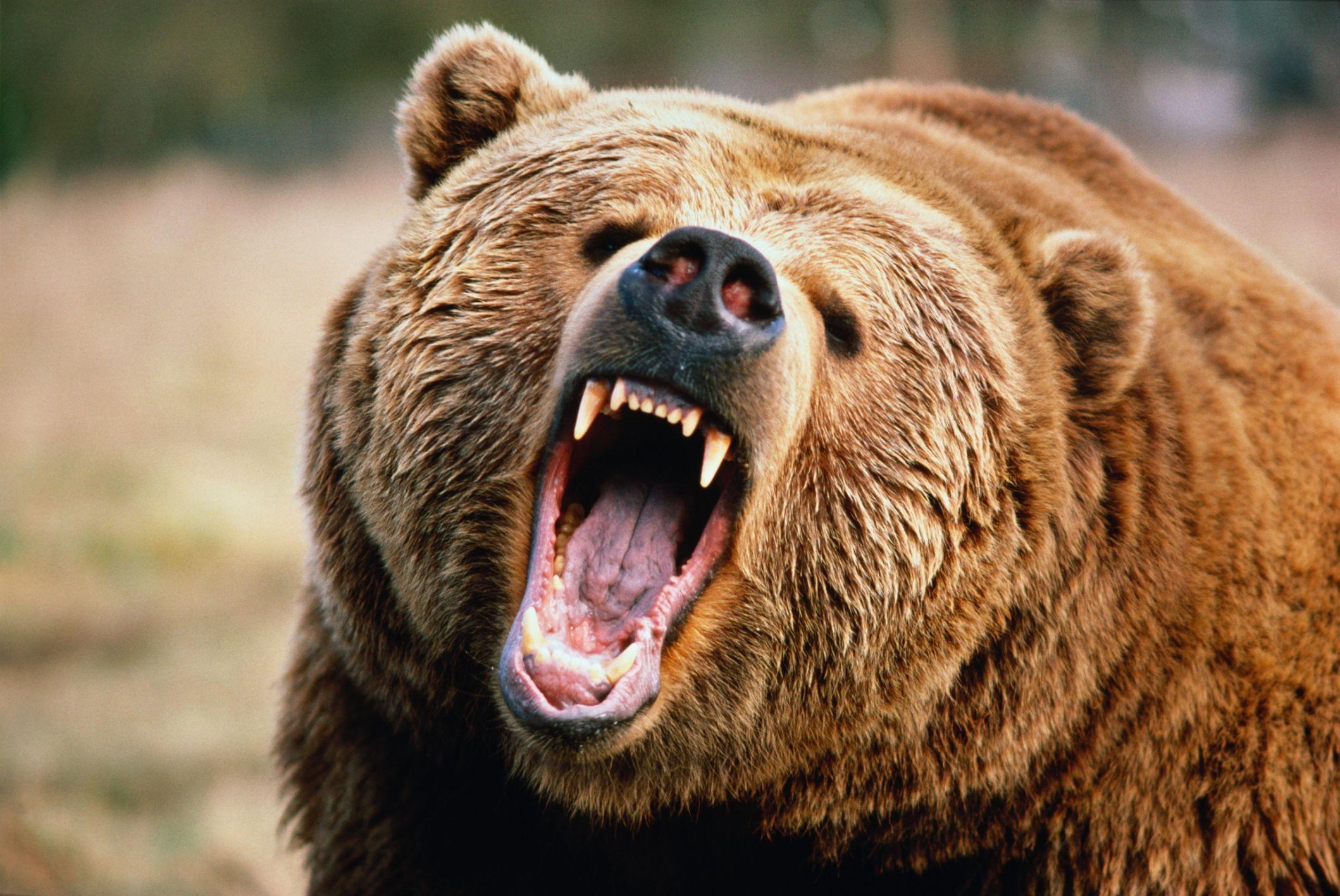 Крошка ши и медведь картинки стороны работающей